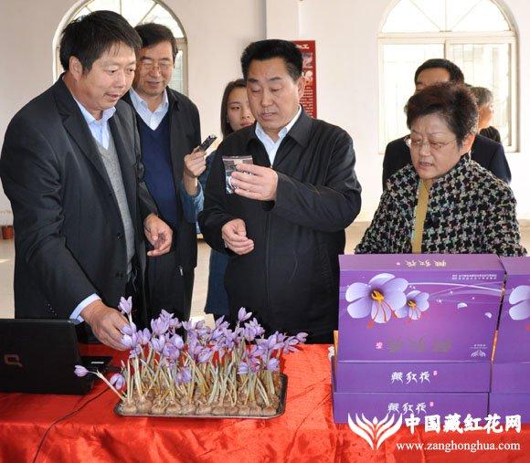省长详细了解河南农业大学藏红花科研教学基地产藏红花的情况